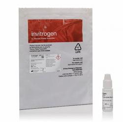 Среда для заключения SlowFade Glass Soft-set Antifade Mountant с DAPI